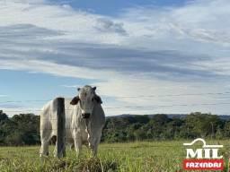 Fazenda em Santa Fé Goiás (Gueroba) São 109 Alqueires