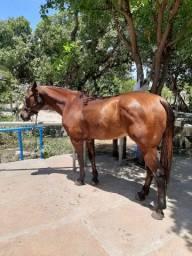Título do anúncio: Cavalo Esquerda de Vaquejada