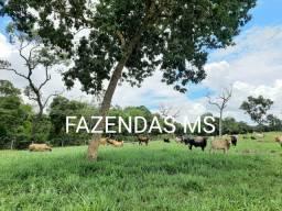 2.500 hectáres Rio Negro-MS formada estruturada fácil acesso