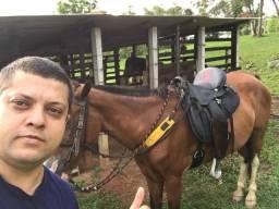 Cavalo manga larga marcha picada