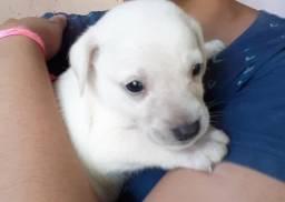 Cachorrinhos- adoção