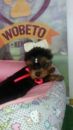 Yorkshire Terrier Wobeto Kennel