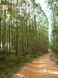 Fazenda de 44 Hectares com Cultivo de Eucalipto à Venda em Alagoinhas/BA ( 400823 )