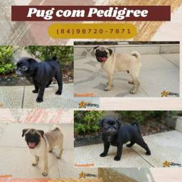 Pug abricot ou preto com pedigree! Excelente linhagem e procedência!
