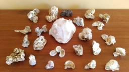 Lote de Conchas para Aquário