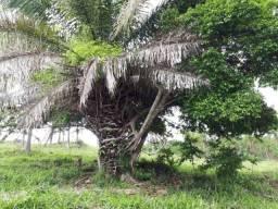 Fazenda de Cultura em Marzagão ? Goiás