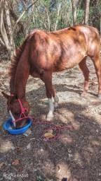 Vende se cavalo bom bem mansinho ou troca por egua