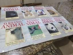 Título do anúncio: O Reino Animal