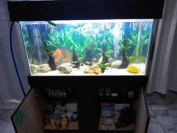 Vendo aquário 200 litros