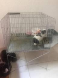 Hamster preto com branco raça