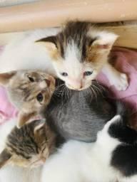 Doação de gato lindo