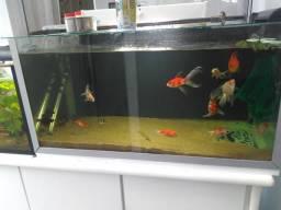 Aquario completo 130 litros