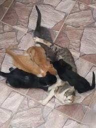 Doação Gatinhos Filhotes