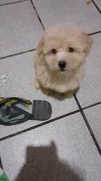 Poodle toy Vendo