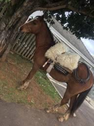 Cavalo graudo
