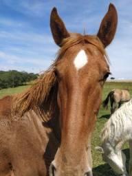 Égua e um potro