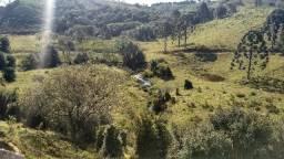 Fazenda para Gado - Próxima a Curitiba - Já formada