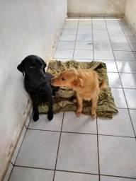 Doação De Cachorros
