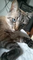Doação lindo gatinho castrado