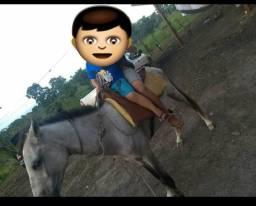 Vendo este cavalo manso