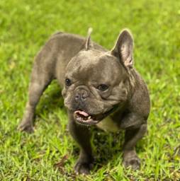 Cobertura Bulldog Blue Sólido