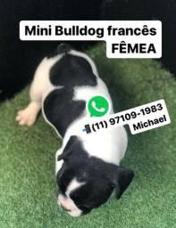 Mini Bulldogs Francês Fêmea Pintada