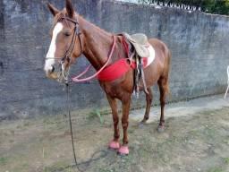 Cavalo vendo e troco