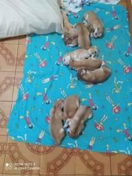 Filhotes de kusky siberiano