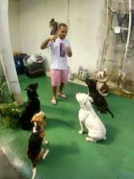 Título do anúncio: Adestramento de cães em domicilio ou em escola pet.