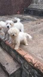 Cachorros doação