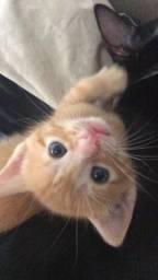 Gato laranja pra adoção