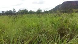 Orpotunidade única no Tocantins vc que queira compra uma fazenda de oportunidade