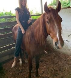 Cavalo inteiro 4 anos registrado