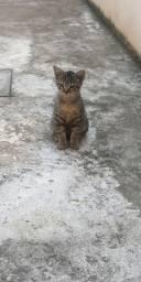 Filhote de gato - macho
