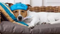 Pet Shop e Clinica Veterinária