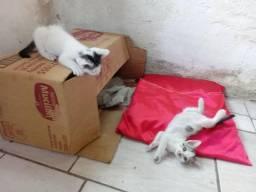 Gatinhos para adoção em Maracanaú
