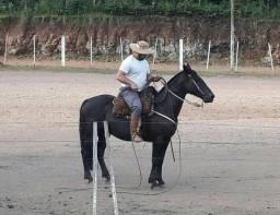 Égua Crioula Puro Sangue Chileno R$ 5.900
