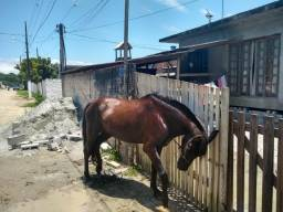 Vendo ou troco cavalo manga larga paulista