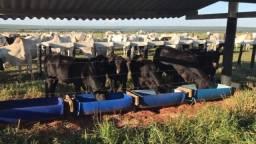 Fazenda Bataguassu