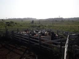 Vendo Fazenda em Carobe