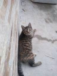 Doa se uma gatinha
