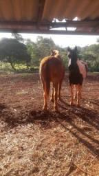 Título do anúncio: Vendo cavalo marchador