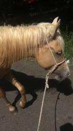 Cavalo aceito proposta