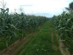 Ótima Fazenda em Casimiro de Abreu-RJ