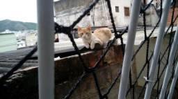 Adote o gatinho Amarelinho!