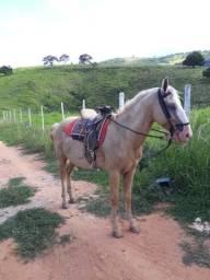 Cavalo castrado picado