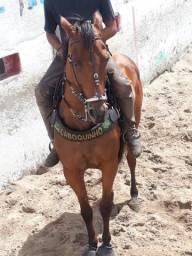 Vendo Cavalo de direita