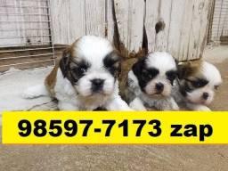 Canil Filhotes Cães Líder BH Shihtzu Poodle Maltês Basset Yorkshire Lhasa