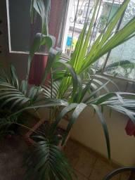 Título do anúncio: Linda palmeira com jarro decorativo