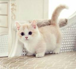 Munsckin Cute